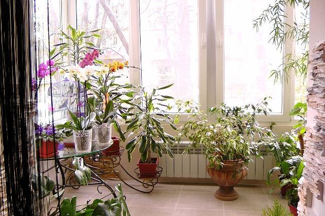 Растения в интерьере квартиры фото