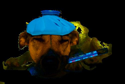 Вылечить собаку в Череповце