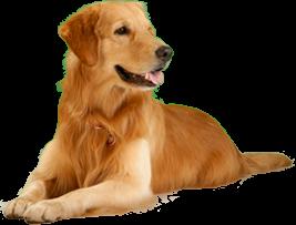 Лечение собаки в Череповце
