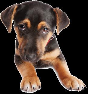 Лечение собак Череповец