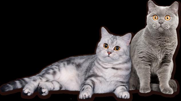 Кастрировать кота недорого