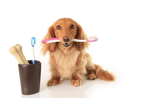 стоматология животным в туле