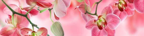 кухонный фартук розовая орхидея