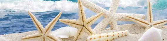 кухонный фартук морская звезда