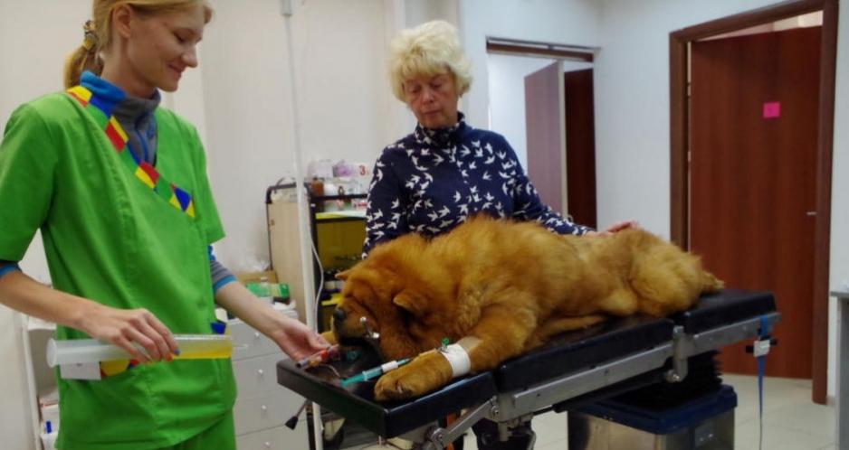 операция собаки в туле