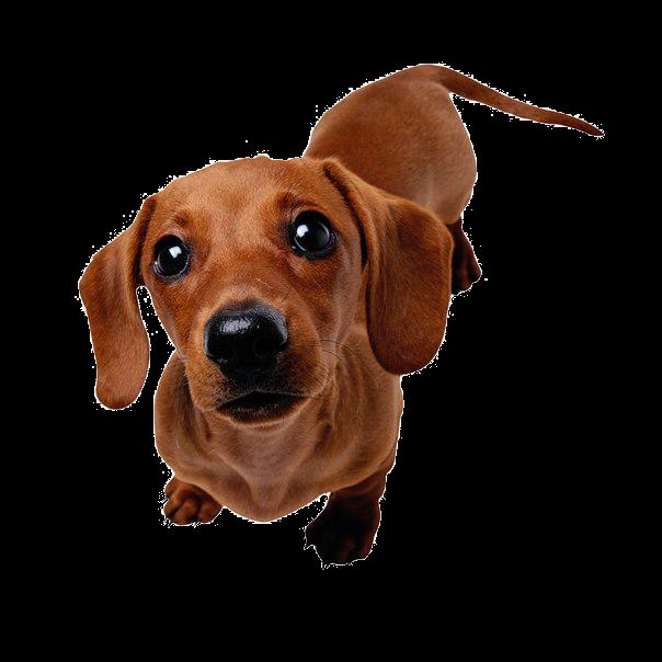 Прививки собакам Череповец