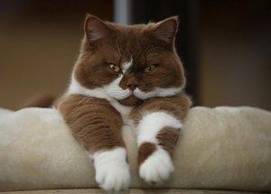 кастрация котов в туле