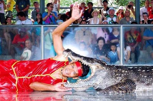 шоу крокодилов в таиланде