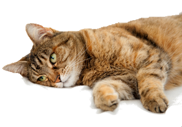 Лечение кошек Череповец