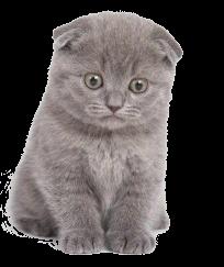 Прививки кошкам Череповец