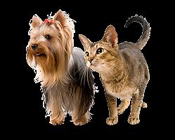 Кастрация котов и собак Череповец