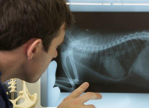 рентген для животных в туле
