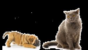 Стерилизация кошек и собак Череповец