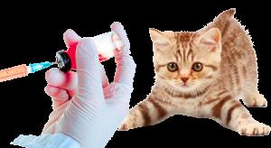 Вакцины против бешенства Череповец