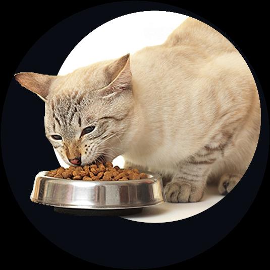 Купить качественный корм в Череповце для кошек