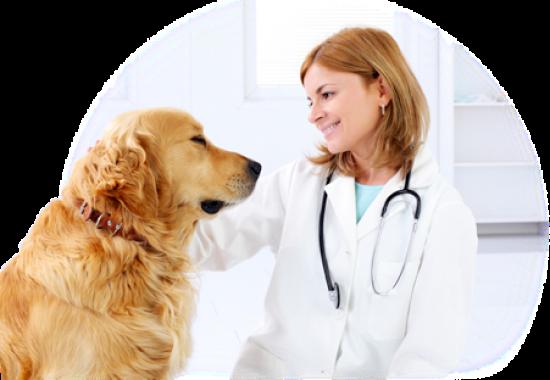 Недорогой ветеринар в Череповце