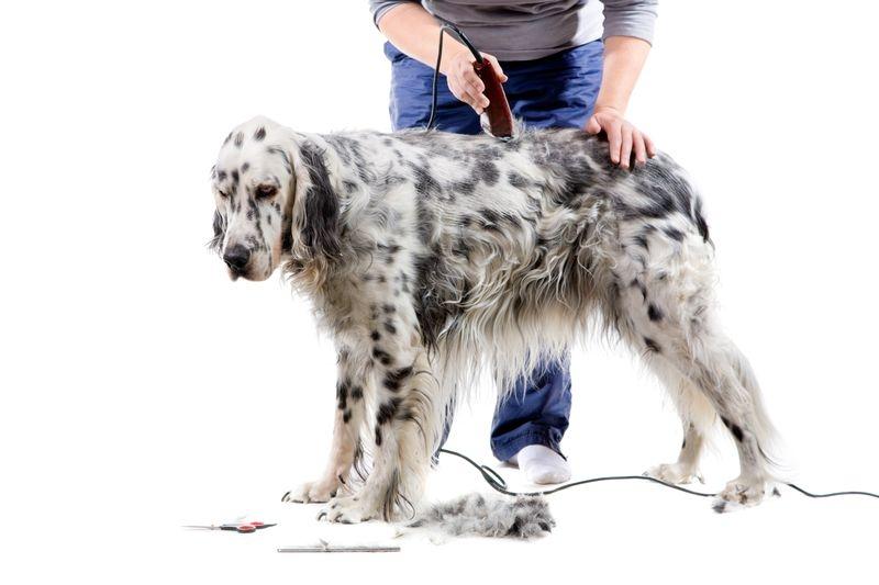 Груминг собак в Череповце