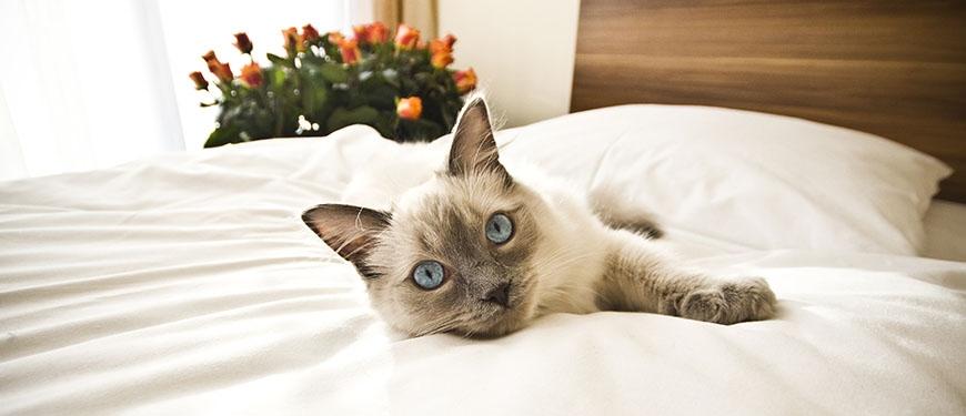 Стерилизация кошек в Череповце