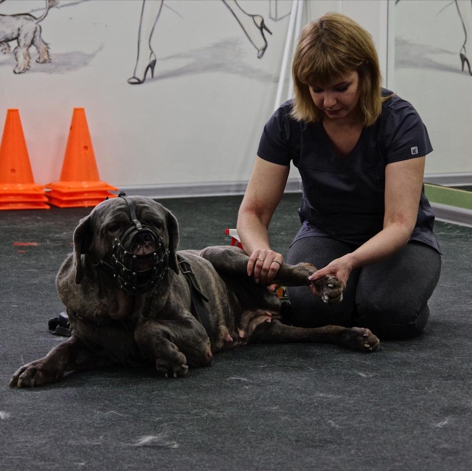 реабилитация животных в туле