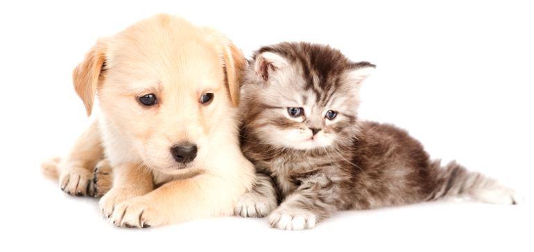 Стерилизация кошек и собак в Череповце