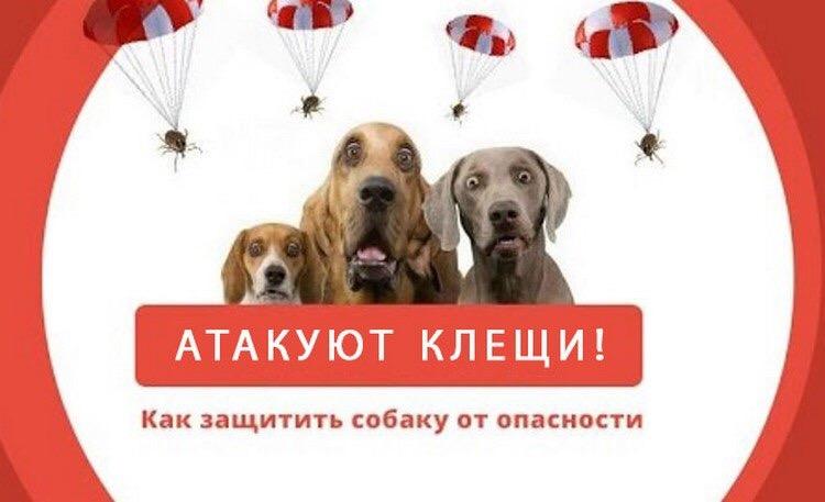 клещи у собаки лечение в туле