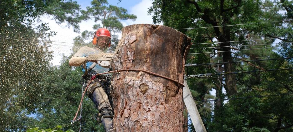 убрать дерево