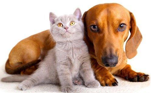 'эндоскопия животных в туле