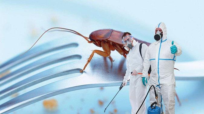 Обработка от тараканов в Череповце
