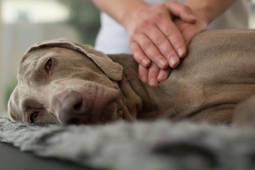 массаж у животных
