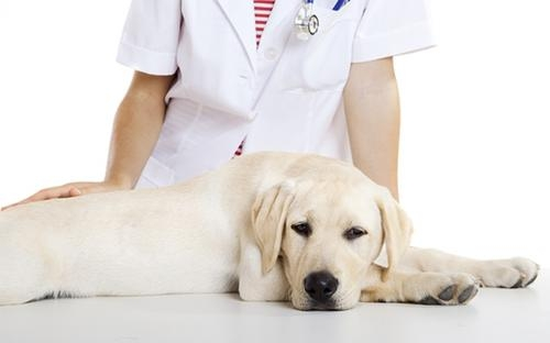 кастрация самцов собак