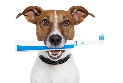 стоматология для животных в туле
