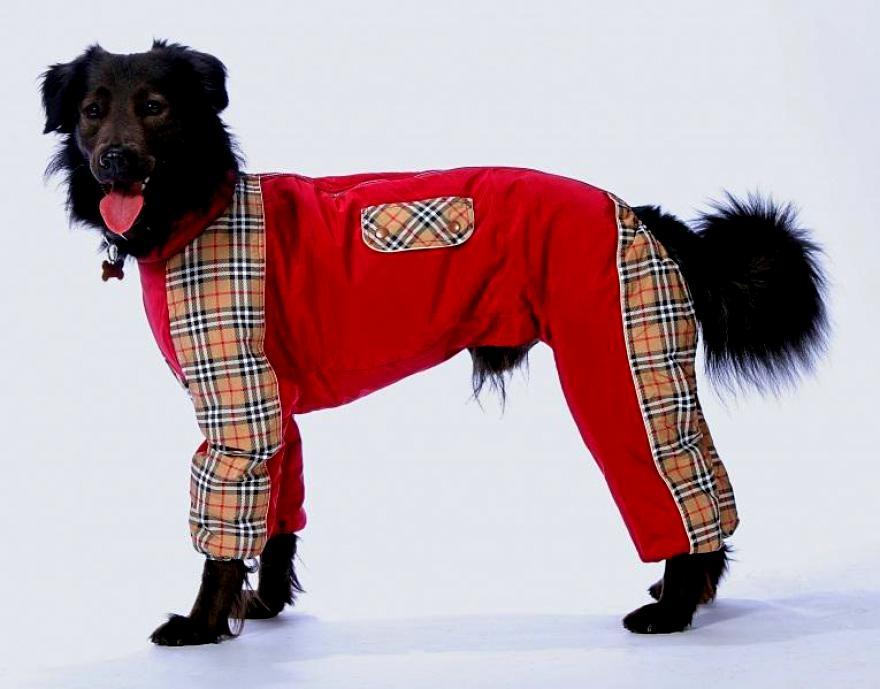 акция на одежду для собак