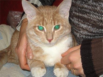 цистит у котов лечение