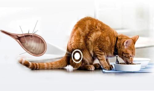 цистит у котов цены на лечение в туле