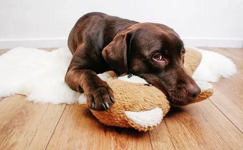 лечение болезней ЖКТ у собак