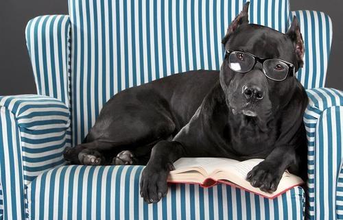 офтальмология собак и кошек тула