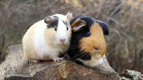 лечение животных в туле
