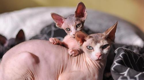 лечение кошек тула