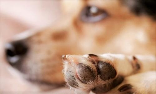 ветеринарные клиники круглосуточно в туле