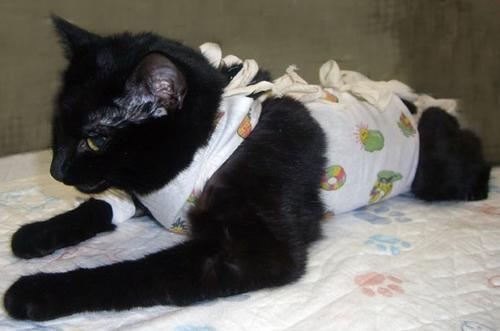 стерилизация кошек тула