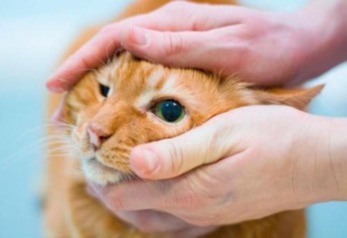 ветеринарная офтальмология в туле