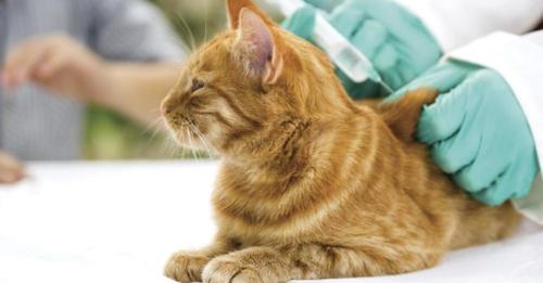 вакцинация кошек цены в туле