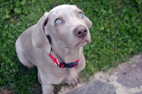 лечение глаз у собаки в туле