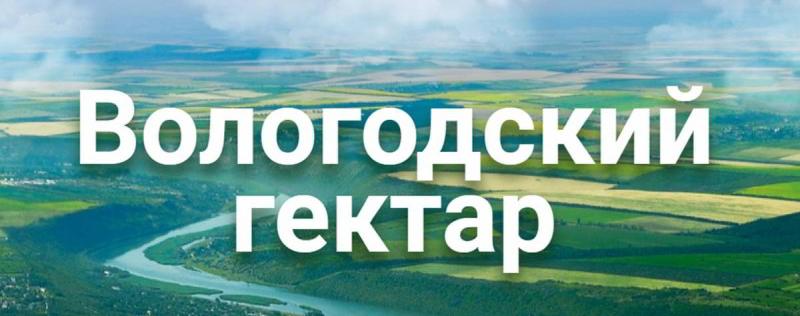 вологодский гектар