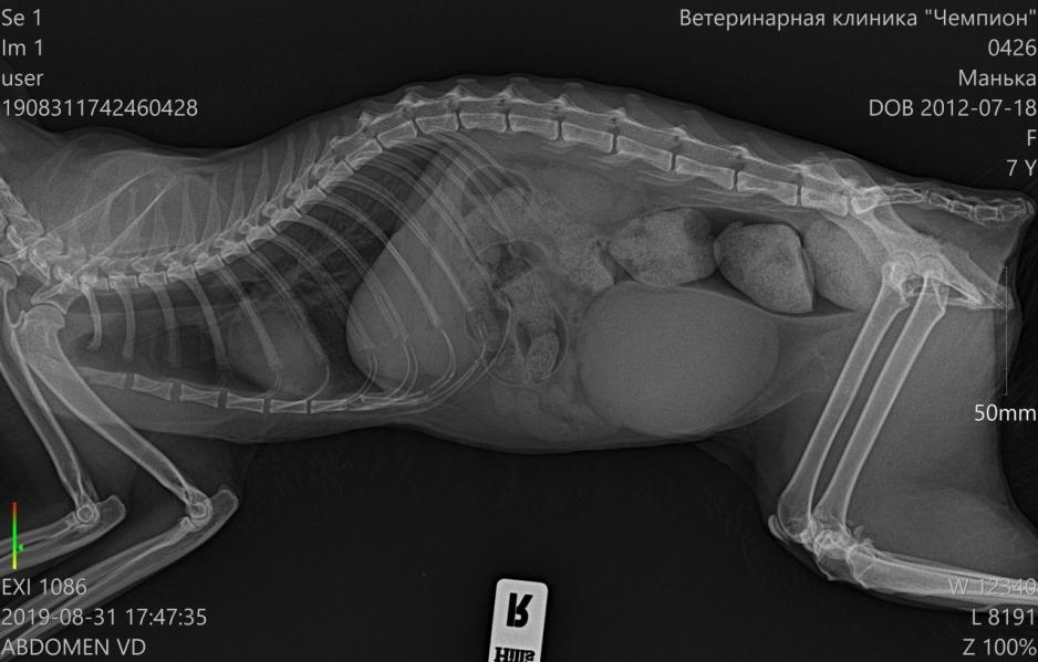 Сделать рентген животных в Череповце