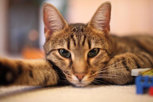 лечение кошек цены в туле