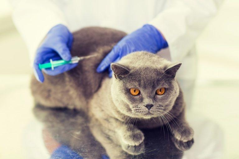 круглосуточная ветеринарная помощь в туле