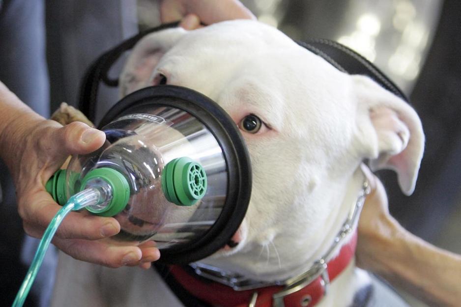 астма у собаки
