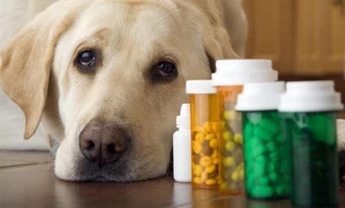 артрит у собак в туле