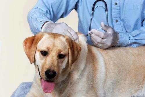 лечение собак в туле
